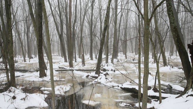 MMSD purchased this 74-acre hardwood swamp near the intersection of Cedar Sauk Road, and County Highway Y, in the Town of Cedarburg for its Greenseams flood management program.