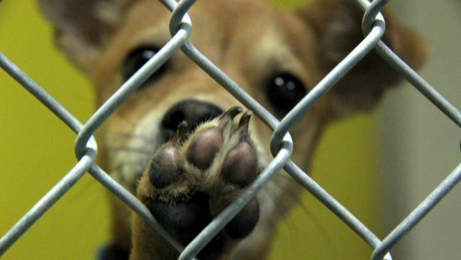 Twenty-six percent of animals taken in at Noah's Ark Animal Shelter are put down.
