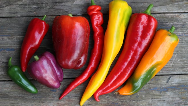 Megan Cain grows colorful peppers in her garden.