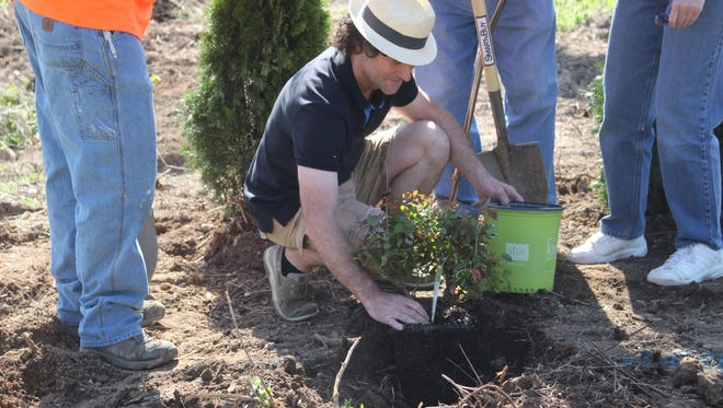 Mayor Paul Bailey plants a Knock-Out Rose bush along lot close to Erin City limits as part of city-wide beautification effort.