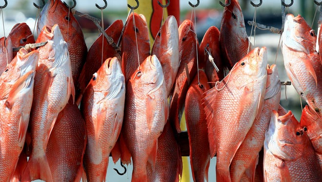 Red snapper season could be extended into the summer, but only on weekends.