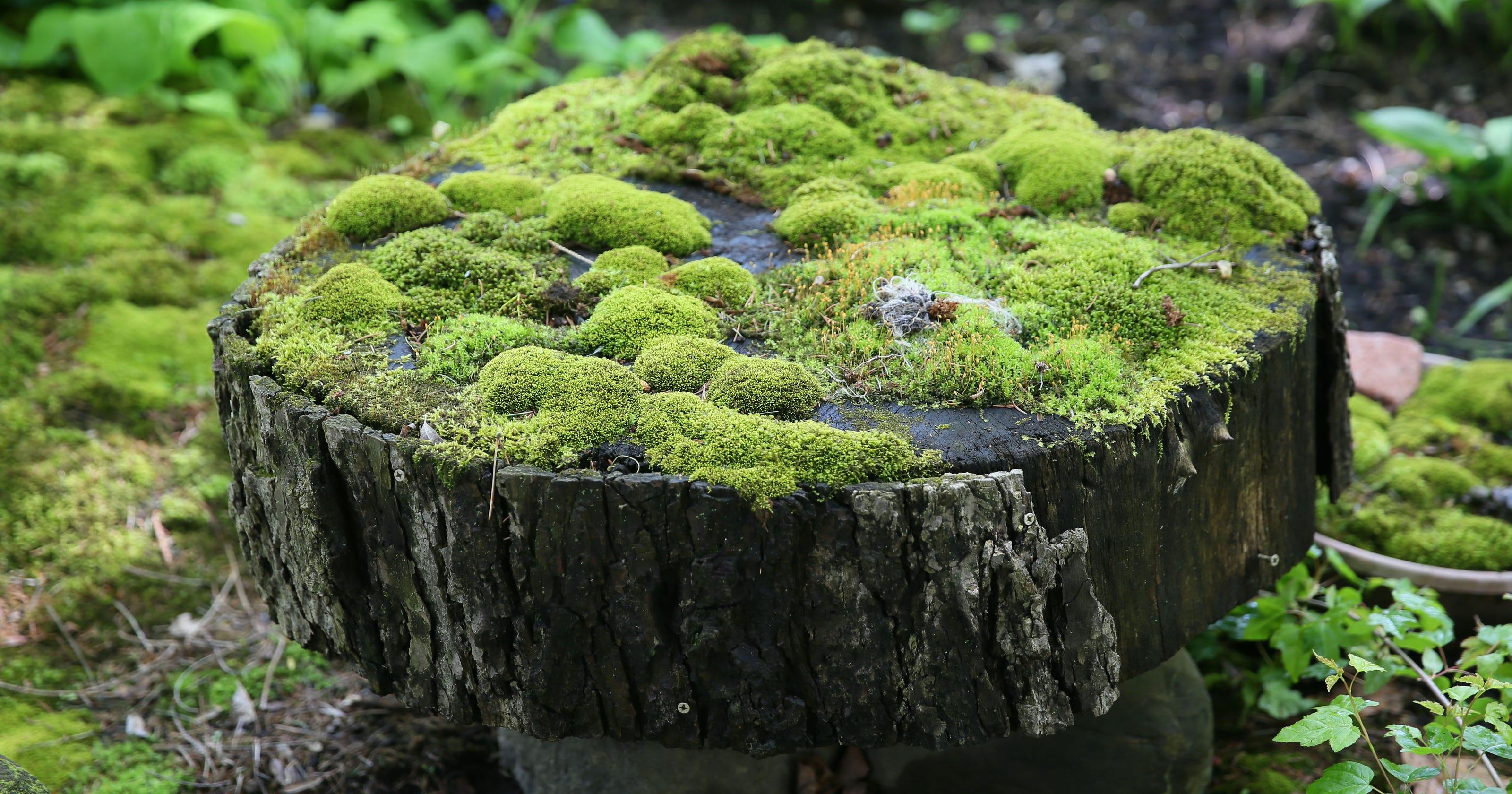 Carpet Of Green Moss Covered Garden Creates A Vivid Landscape