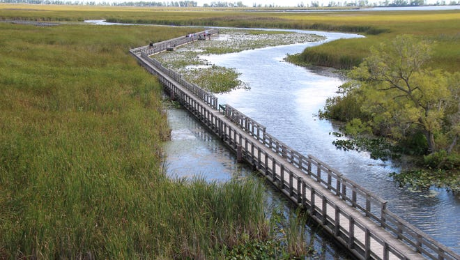 The Point Pelee boardwalk stretches across the park's marshland.