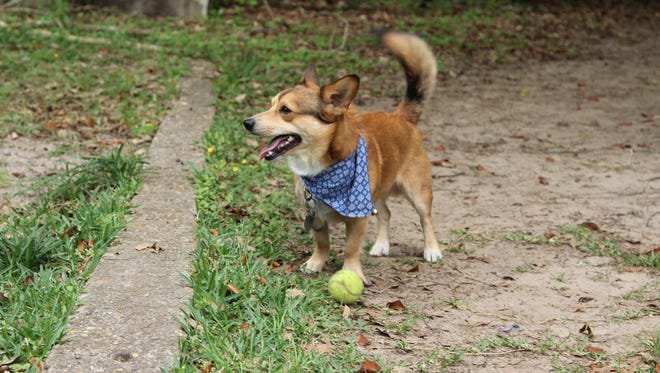 A new dog park is opening in Tallahassee on the northwest side of E. Peck Greene Park.