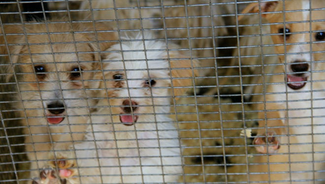 The Lancaster County SPCA announced Tuesday that it is going out of business due to a failed business model and lack of funds.