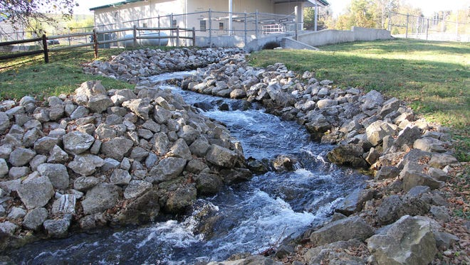 Shepherd of the Hills fish hatchery tricks brown trout from Lake Taneycomo into swimming up fish ladders to recover and fertilize their eggs to produce more than 50,000 fish a year.