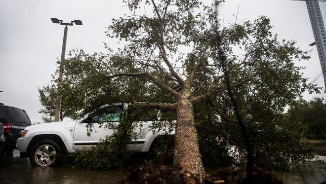 A fallen tree lies on top of a Jeep in the parking lot of the Naples Daily News while the eye of Hurricane Irma passes  through North Naples on Sunday, Sept. 10, 2017.