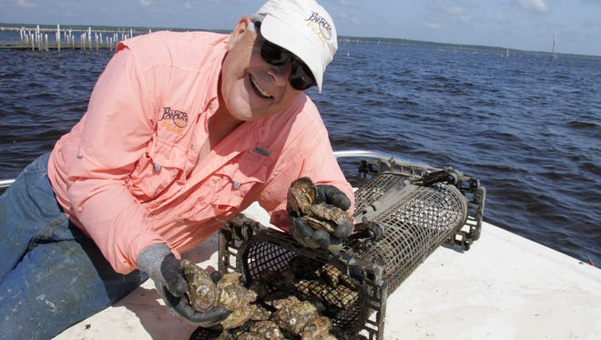 Robin Olin, CEO of the Panacea Oyster Co-Op Corporation, harvesting oysters  in Apalachee Bay.