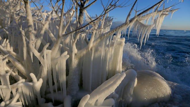 Ice hangs over frozen tree branches.