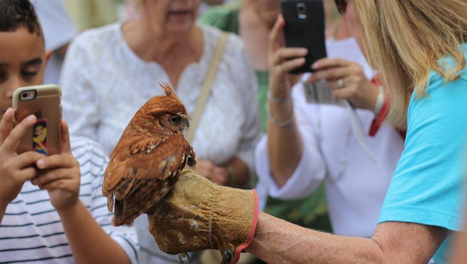 Screech owl Kali is held by a Treasure Coast Wildlife Care Specialist.