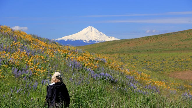 Wildflower-filled hiking trails highlight Columbia Hills State Park.