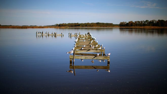 Birds occupy a dilapidated pier on the Little Blackwater River in Church Creek, Maryland.