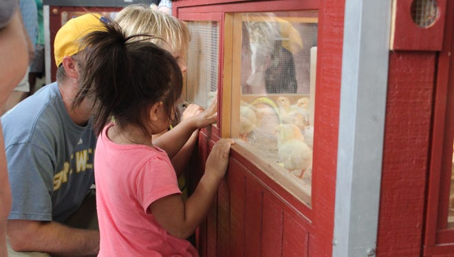 Thanks to Merton Feed Company, guests at the Wisconsin State Fair can watch thousands of baby chicks and quail be born throughout the fair.
