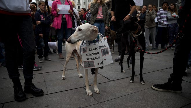 A banner hangs from a dog's neck reading ''Excalibur: neither forget nor forgive' as demonstrators protest against the execution of Excalibur, the euthanized pet dog of Spanish nursing assistant Teresa Romero who is infected with Ebola, and the government's Ebola strategy, during a gathering in Madrid, Spain, Saturday. In Dallas, Texas, officials said the latest Ebola patient there has a dog who will not be euthanized.