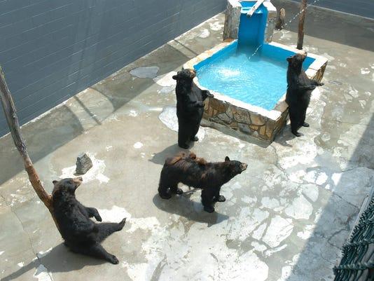 cherokee bear zoo.jpg