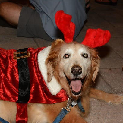 Feliz naughty dog? CIS Canine Christmas Parade features 75 dolled-up dogs