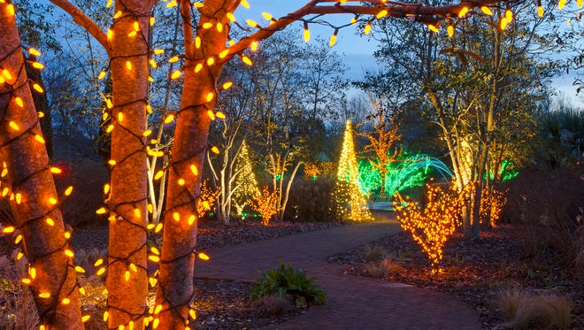 Festive outdoor lights have been hung on plants and trees in a park for the Holiday Season.