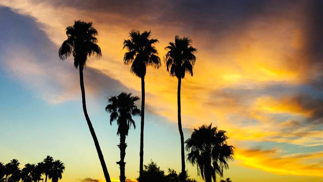 """Nothing says """"classic Arizona"""" like palm trees silhouetted at sunset. Sean Alexander Reaves shot this photo at the Arrowhead Country Club in Glendale. See more of his photos at instagram.com/reavesalexander."""