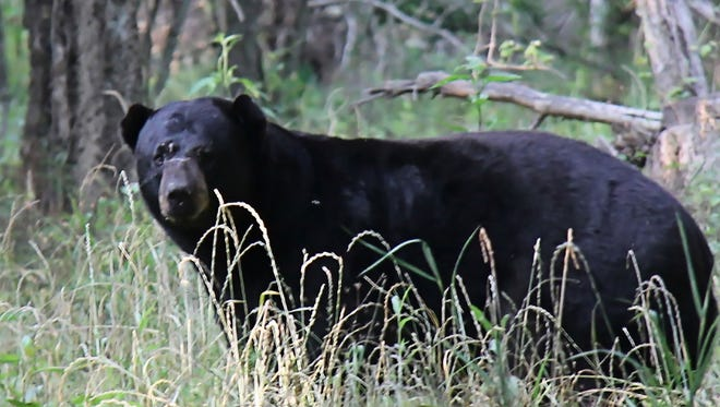 Three Mississippi men face sentencing in charges related to the illegal killing of a Louisiana black bear in Lauderdale County.