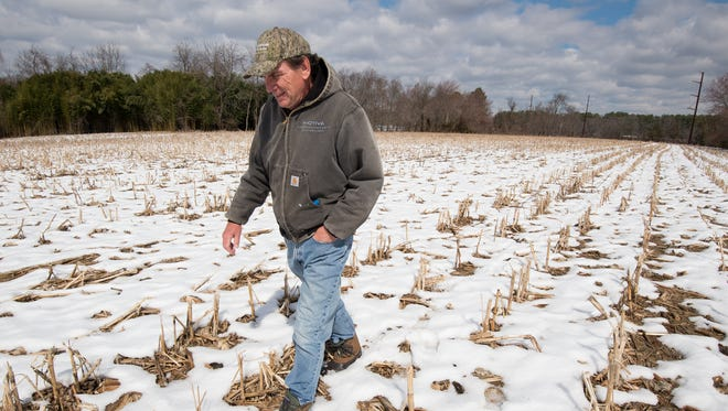 John Gillespie walks on part of his 130 acres of farmland off of Port Penn Road in Middletown.