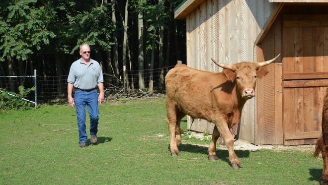 After his July 28 retirement, Elmore Village Superintendent Buck Stoiber will have more time to tend to the small menagerie he keeps at his house just outside the village limits, which includes a herd of Scottish Highland Cattle.
