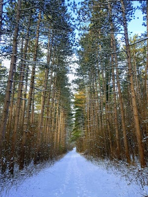 The Scuppernong Trails pass through pine plantations in the Kettle Moraine State Forest-Southern Unit