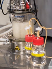 Beta lactamas enzymes are extracted from E. Coli for