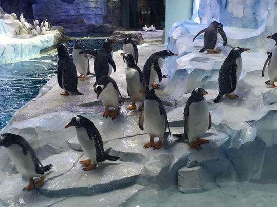 635961376240014550-penguins3