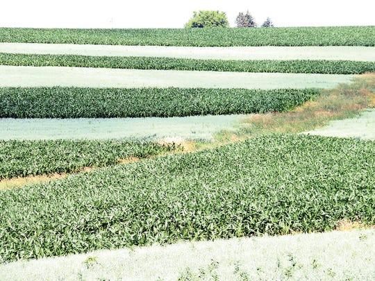 Crops like those grown in contour strips on Majestic View Dairy farm near Lancaster, Wisconsin, will be whisked to table at the new Farmers Wife restaurant in West Allis. The restaurant was cleared to receive nearly $66,000 in startup funding, most of it in federal community development block grant dollars.