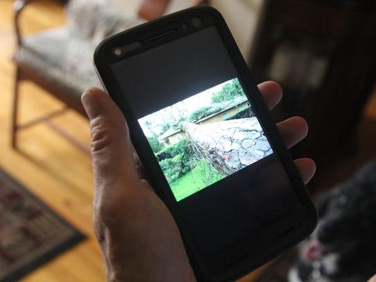 Dr. Myrle Grate shows a cell phone photo of the pine