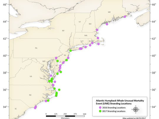 A NOAA Fisheries map shows the locations of recent humpback whale strandings. Purple dots mark 2016 strandings. Green dots are strandings in 2017.