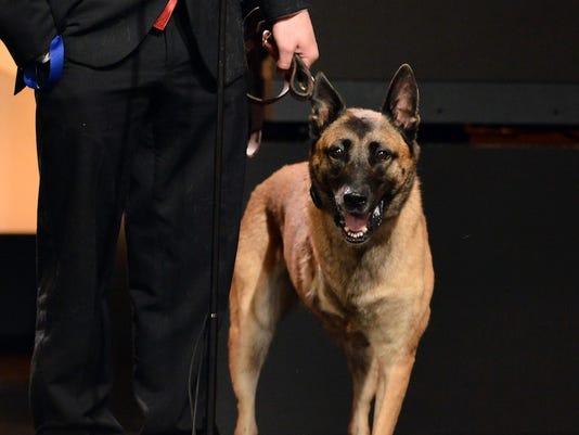 hero-dogs-layka.jpg