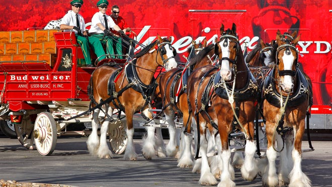 The Budweiser Clydesdales will make an exclusive hitch stop in Vero Beach on March 2 to raise awareness for United Against Poverty and for its 'Burgers & Brews – An American Heritage' event slated for June 30, in downtown Vero Beach.