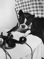 """Bottom right, Sonny Boy, """"The Talking Dog,"""" posed to talk over phone in Reno in 1949. Photos provided by Nevada Historical Society"""