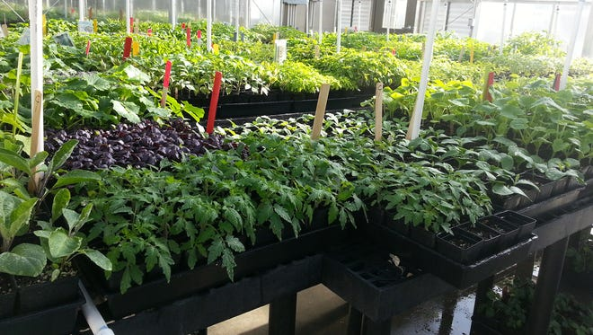 About 5,000 plants grown in Cooperative Extension greenhouses by Master Gardeners will be for sale May 16 at the Washoe County Cooperative Extension office.