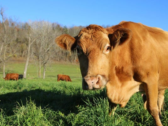 Here's the beef on grass-fed and pasture-raised meat and dairy