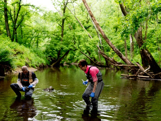 Grace Schwartz, postdoctoral environmental sciences researcher, searches for algae growing on stones in a contaminated creek inside the Oak Ridge Wildlife Management Area in Oak Ridge, Tennessee on Wednesday, May 16, 2018.