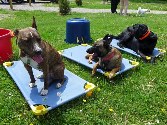Dog show 15a.jpg