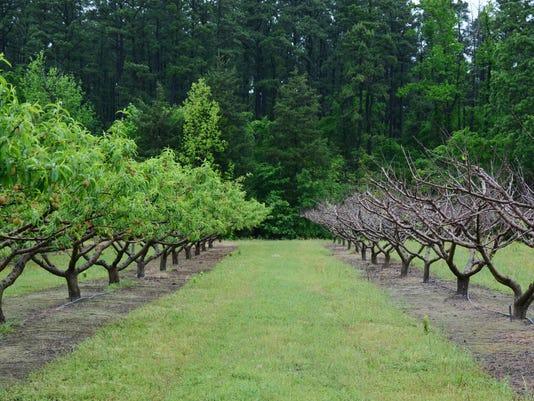 Fruit-Crops-2.jpg