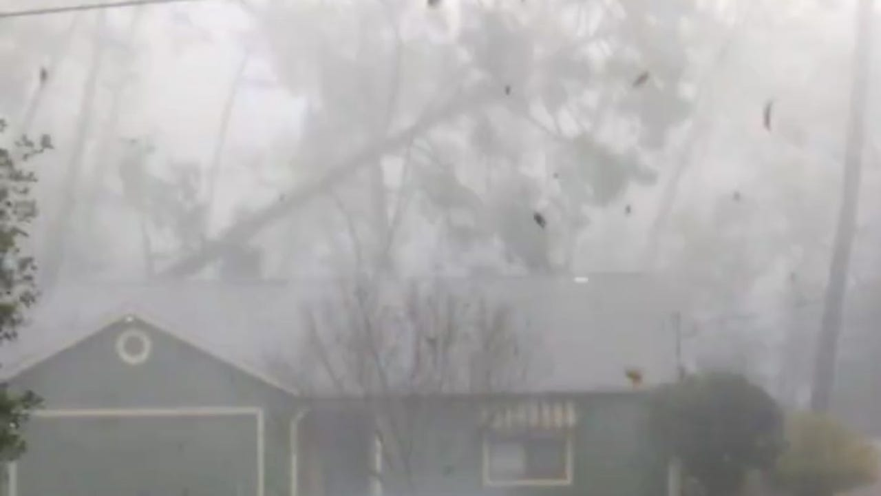 Tree through the house on Gray Birch Way in Forest Green neighborhood