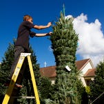Cameron Rough, 16, prepares Fraiser fir Christmas trees to sell Friday at Cypress Lake United Methodist Church in Fort Myers. Rough is a member of Boy Scout Troop 119 in which proceeds from tree sales will benefit.