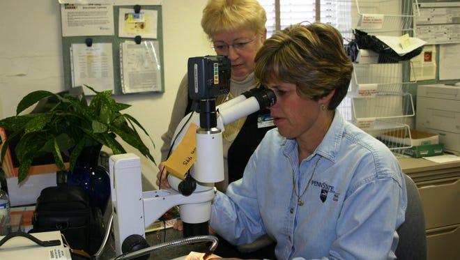 York County Penn State Extension Master Gardeners Rita Potter and Carol McMenamy diagnose a plant problem.