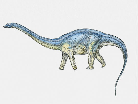 New research suggests that the Brontosaurus name may