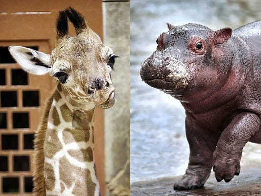 Memphis zoo babies