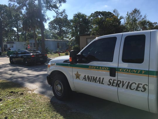 Animal services collected a pit bull that attacked