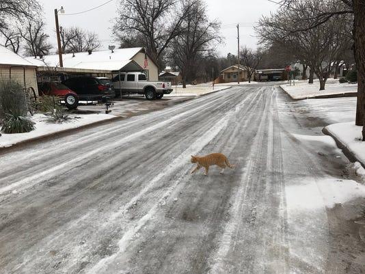 Abilene-Ice-cat-in-street.jpg