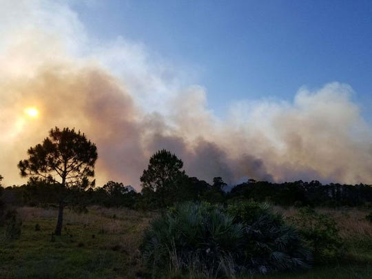 Bluefield Preserve Wildfire in St. Lucie County burned 205 acres earlier this year. Forest Service officials said they will be watching El Niño in the coming months.