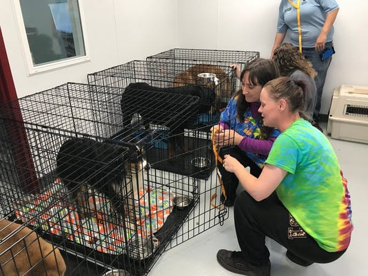Show dogs found 2