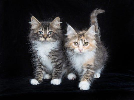 636646828724407638-6-15-18-two-kittens.jpg