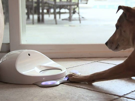 The CleverPet game console challenges your pet and